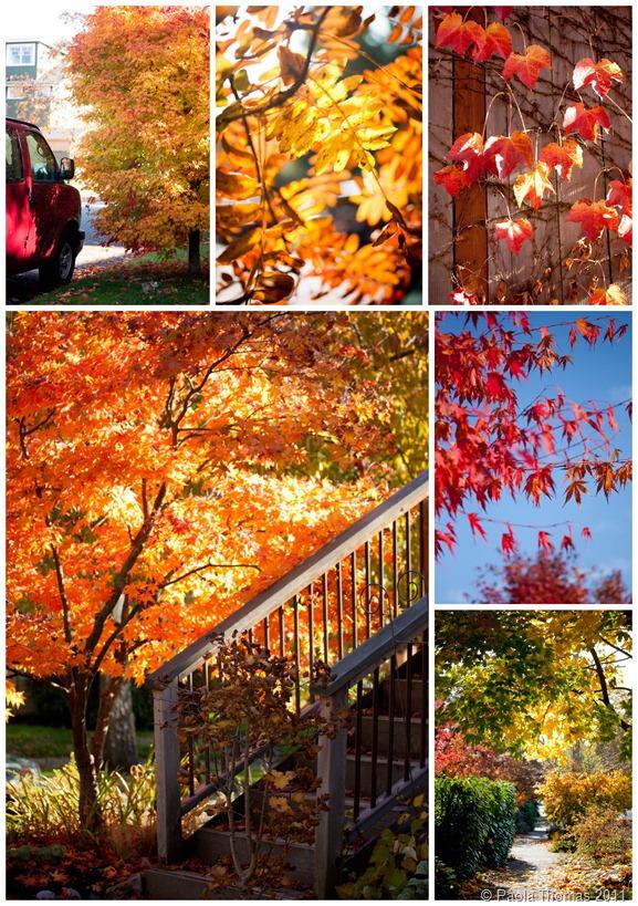 Autumn Leaves1