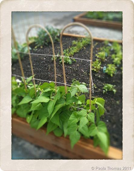 vegetable garden (1 of 1)
