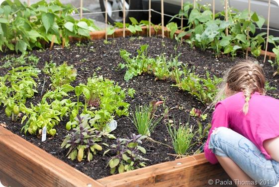 vegetable garden4