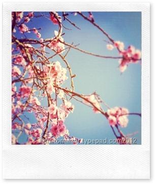 instagrams-paola-thomas (3 of 24)