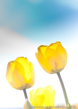 washington-tulip-festival (16 of 17)