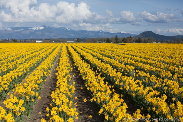 washington-tulip-fest (1 of 1)-2