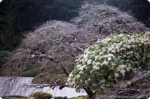 portland-japanese-garden (10 of 12)