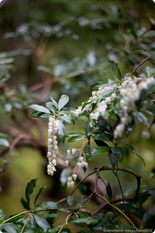 portland-japanese-garden (4 of 12)