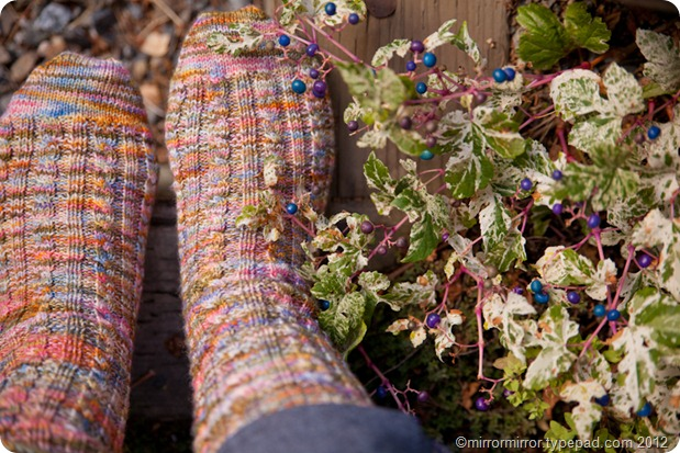 mansfieldgardenpartysocks