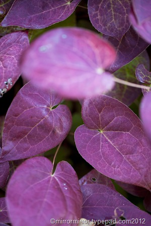 autumnleaves (16 of 20)