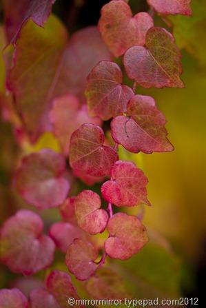 autumnleaves (19 of 20)