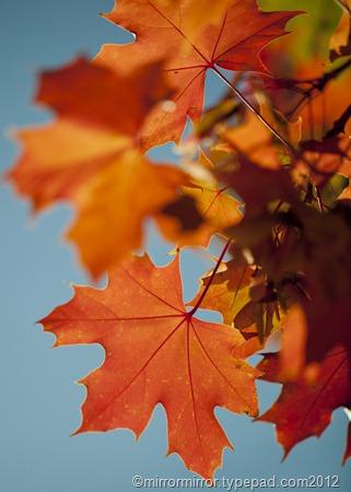 autumnleaves (7 of 20)