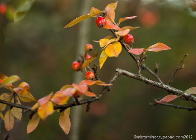 autumnleaves (15 of 20)