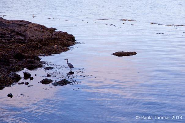 canoeisland-4