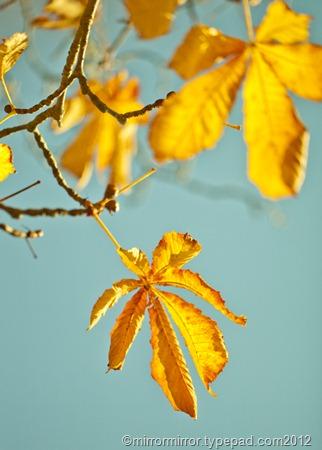 autumnleaves (9 of 20)