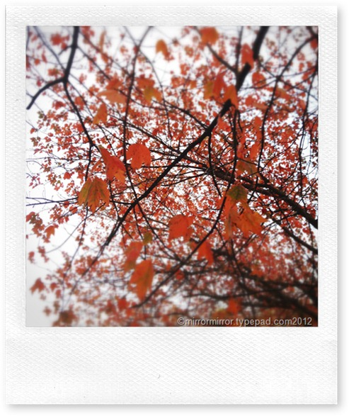 autumn (1 of 1)