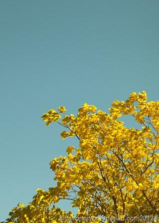 autumnleaves (1 of 20)