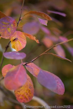 autumnleaves (14 of 20)