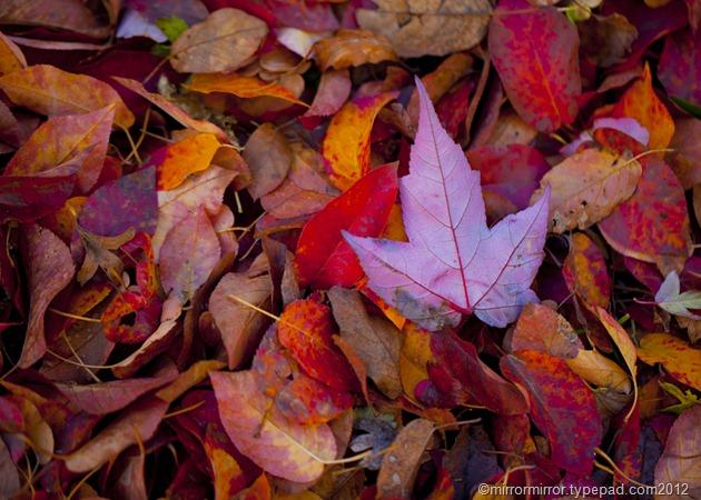 autumnleaves (18 of 20)
