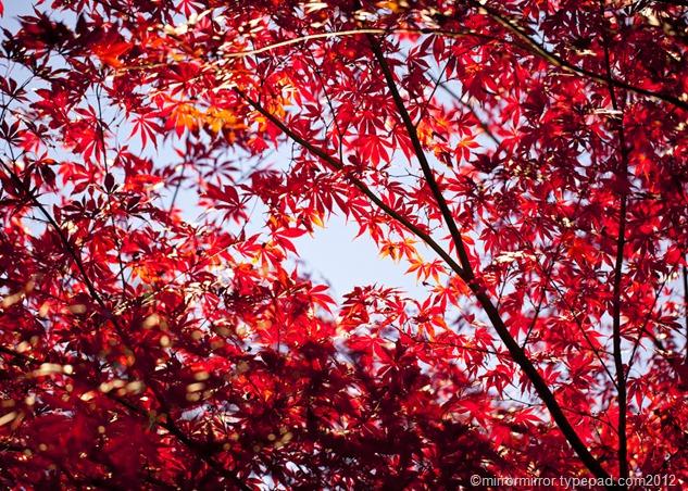 autumnleaves (11 of 20)
