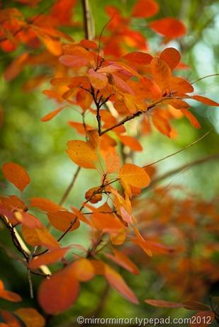 autumnleaves (13 of 20)